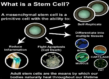 amniotic stem cells